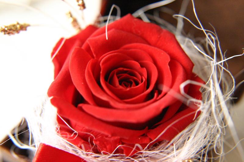 #_0132  〜 Rose 〜