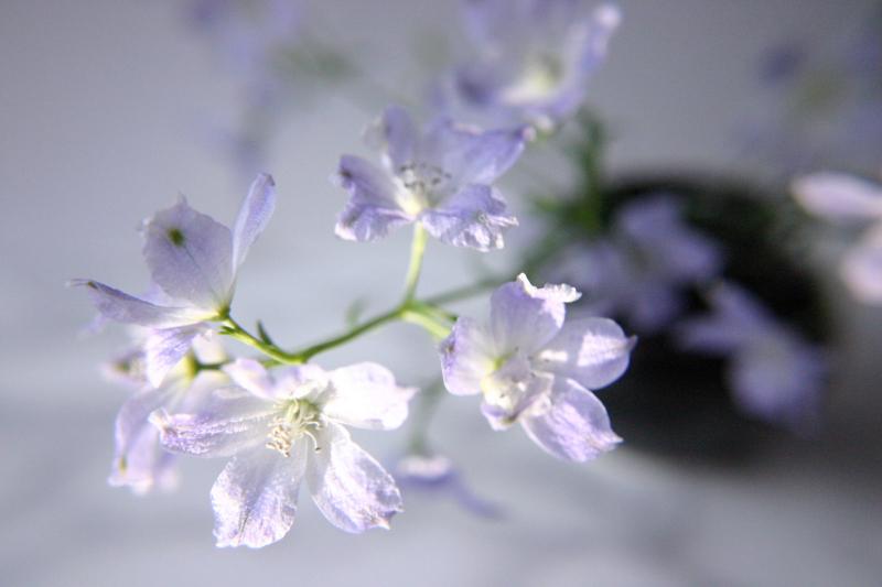 #_0114  〜 Flowers 〜