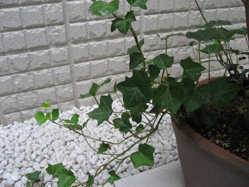 #_0119  〜 Leaf 〜
